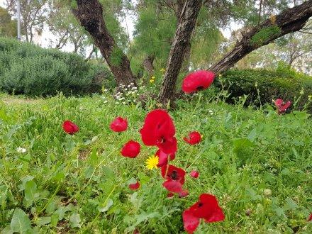 טבע עירוני בימי קורונה, תל אביב - יפו. תמונה: רומי צ'ילאג